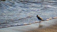 pájaro en la orilla del mar
